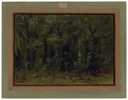 Interior of an Amazon Forest - Zurumati