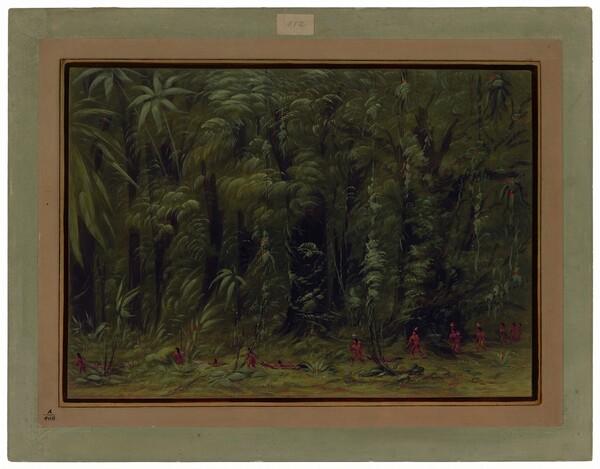 Interior of an Amazon Forest - Zurumati