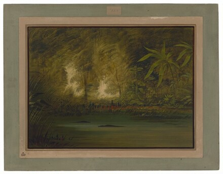 A Lagoon of the Upper Amazon