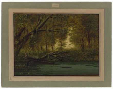 An Alligator's Nest
