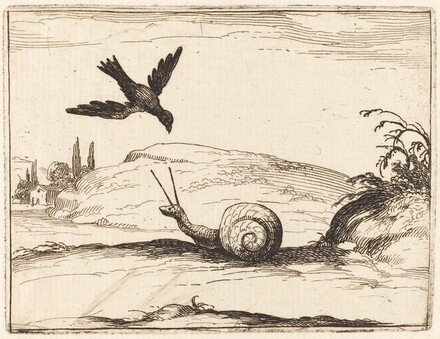 Crow and Snail