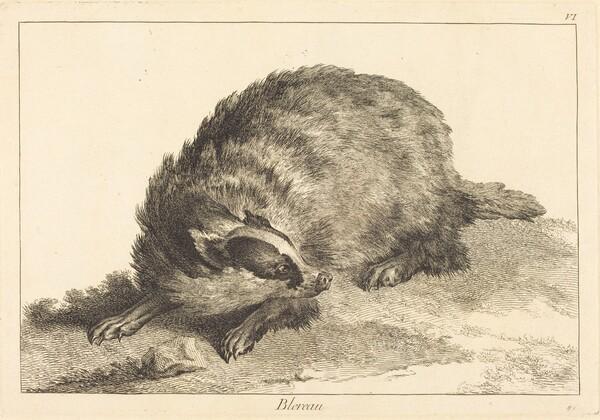 Blereau (Badger)