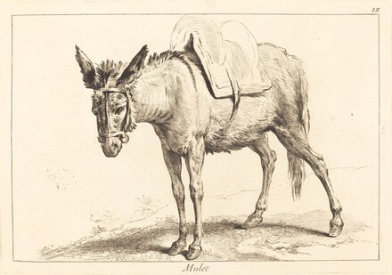 Mulet (Mule or Saddled Donkey)