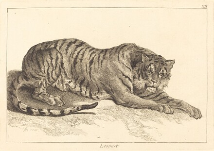Leopart (Leopard or Tiger)