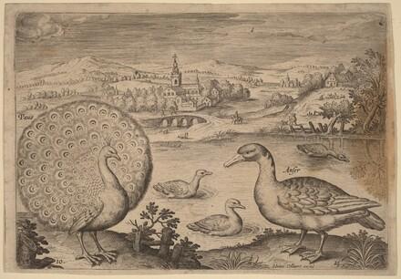 Birds, Avium Vivae Icones