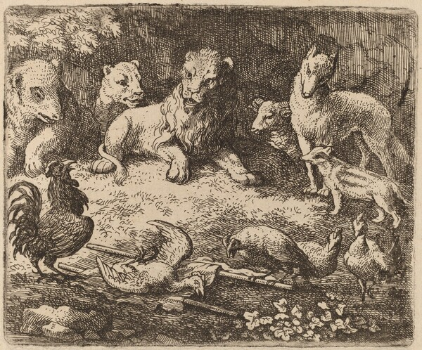 The Rooster Charges Reynard