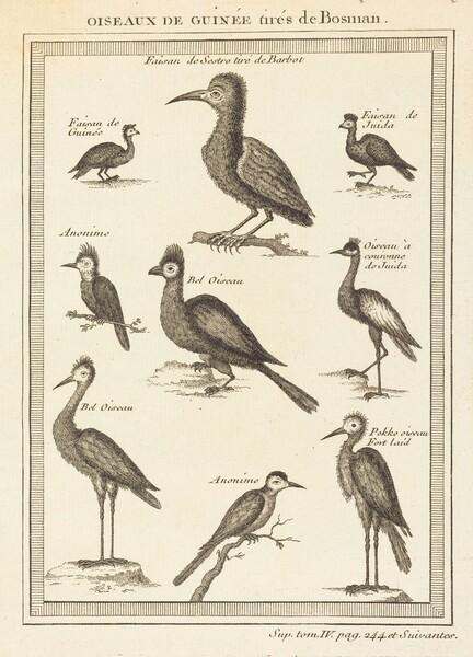Oiseaux de guinee tires de bosman