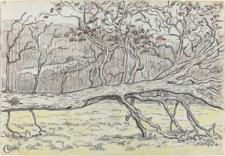 Felled Tree, Normandy