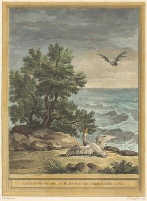 La chauve-souris, le buisson et le canard (The Bat, the Bush, and the Duck)