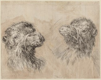 Two Camel Heads [recto]