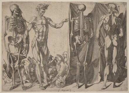 Squelettes et Ecorches