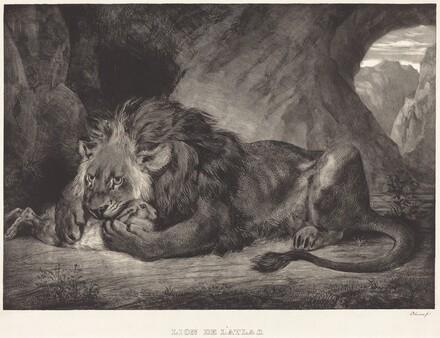 Lion of the Atlas Mountains (Lion de l'Atlas)