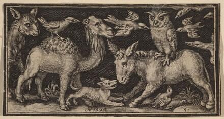 Owl on Back of Donkey, Bird on Back of Camel with Other Animals