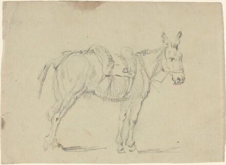 Donkey Stretching a Hind Leg