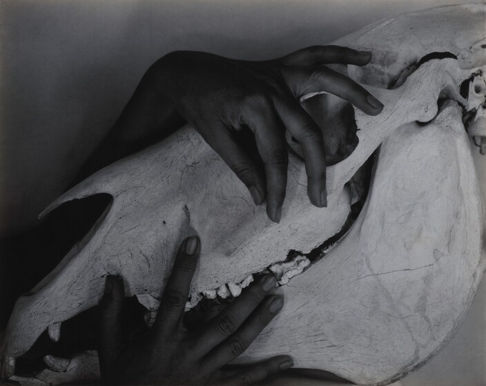 Georgia O'Keeffe—Hands and Horse Skull