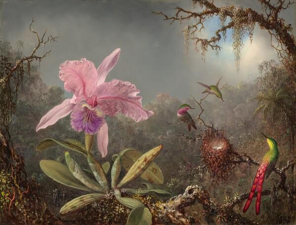 Cattleya Orchid and Three Hummingbirds