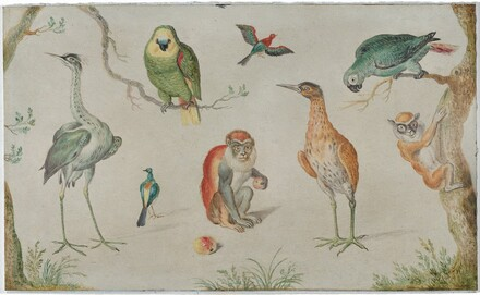 Study of Birds and Monkeys