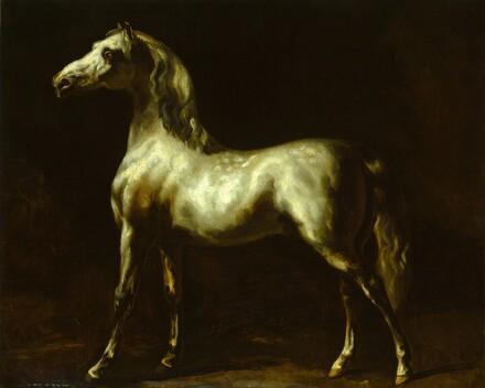 Gray Stallion