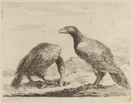 Two Eagles, One Eating a Small Lamb