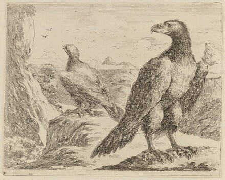 Two Eagles, Both with Heads Turned to the Left