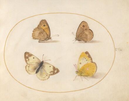 Animalia Rationalia et Insecta (Ignis):  Plate IX