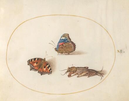 Animalia Rationalia et Insecta (Ignis):  Plate XI