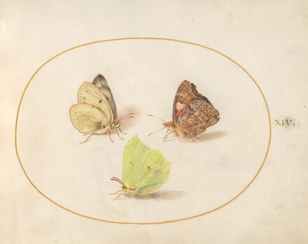 Animalia Rationalia et Insecta (Ignis):  Plate XIV