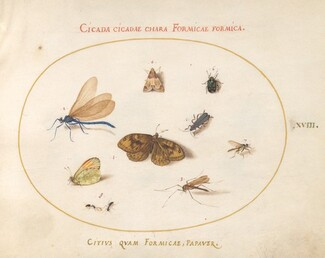 Animalia Rationalia et Insecta (Ignis):  Plate XVIII