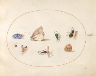 Animalia Rationalia et Insecta (Ignis):  Plate XIX