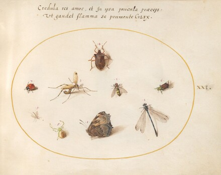 Animalia Rationalia et Insecta (Ignis):  Plate XXI