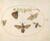 Animalia Rationalia et Insecta (Ignis):  Plate XXIII