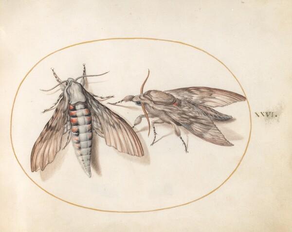Animalia Rationalia et Insecta (Ignis):  Plate XXVI