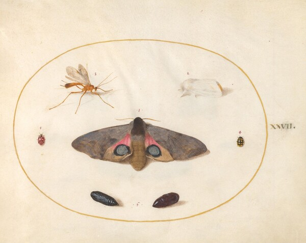 Animalia Rationalia et Insecta (Ignis):  Plate XXVII