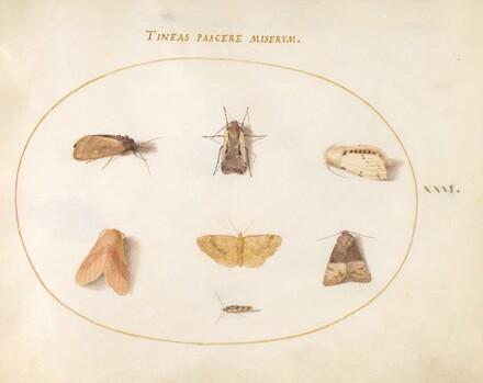 Animalia Rationalia et Insecta (Ignis):  Plate XXXI
