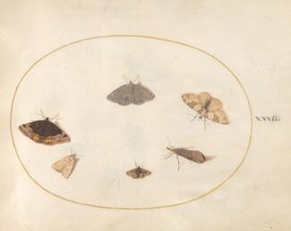 Animalia Rationalia et Insecta (Ignis):  Plate XXXII