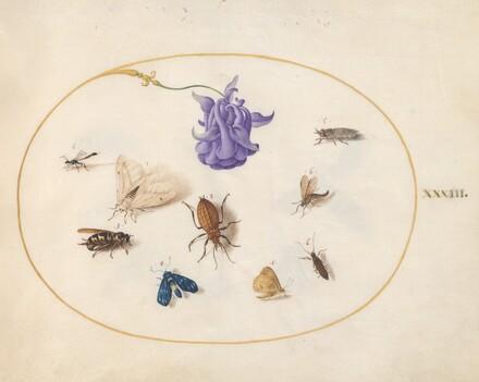 Animalia Rationalia et Insecta (Ignis):  Plate XXXIII