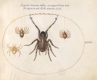 Animalia Rationalia et Insecta (Ignis):  Plate XXXV