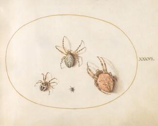 Animalia Rationalia et Insecta (Ignis):  Plate XXXVI