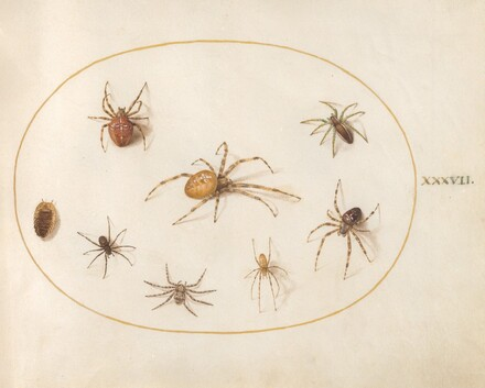 Animalia Rationalia et Insecta (Ignis):  Plate XXXVII