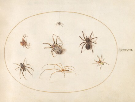 Animalia Rationalia et Insecta (Ignis):  Plate XXXVIII