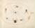 Animalia Rationalia et Insecta (Ignis):  Plate XL