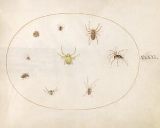 Animalia Rationalia et Insecta (Ignis):  Plate XLI