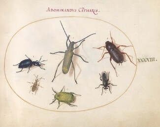 Animalia Rationalia et Insecta (Ignis):  Plate XLIII