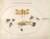 Animalia Rationalia et Insecta (Ignis):  Plate XLVII