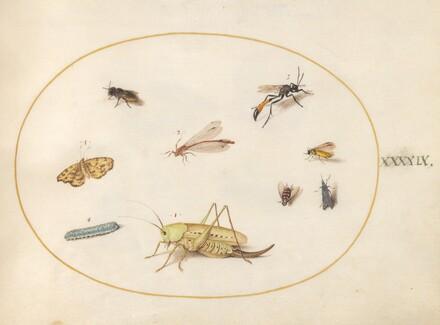 Animalia Rationalia et Insecta (Ignis):  Plate XLIX