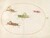 Animalia Rationalia et Insecta (Ignis):  Plate LII