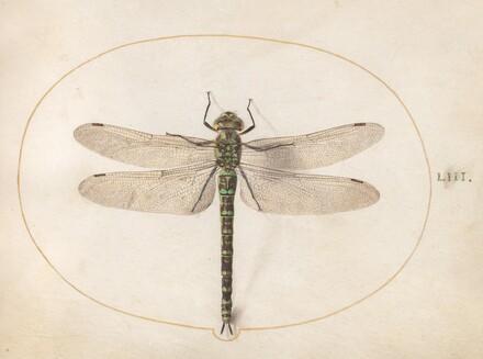 Animalia Rationalia et Insecta (Ignis):  Plate LIII