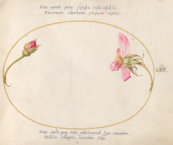 Animalia Rationalia et Insecta (Ignis):  Plate LVI