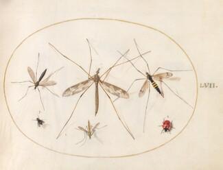 Animalia Rationalia et Insecta (Ignis):  Plate LVII