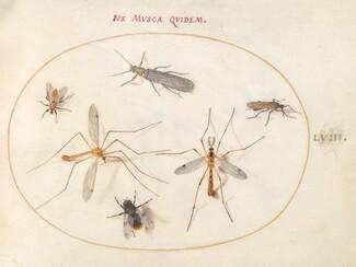 Animalia Rationalia et Insecta (Ignis):  Plate LVIII